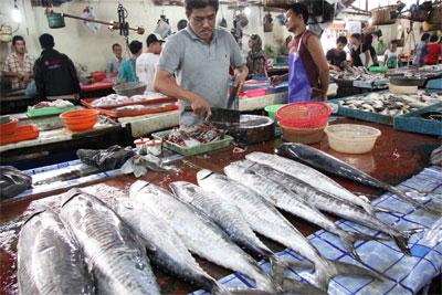 Nelayan Pantai Popoh Tulungagung Butuh Cold Storage