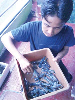 Peternak Lobster Jember Gunakan Rusun