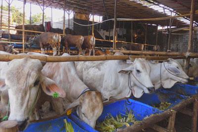 Disnak Jatim Selenggarakan Bazaar Ternak Kurban