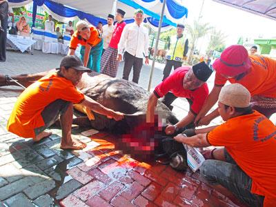 Pelindo III Sumbangkan Ratusan Hewan Kurban