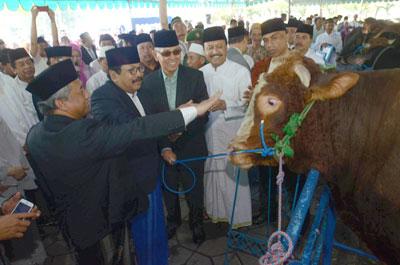 Presiden Kurban Sapi 1,25 Ton, Gubernur 840 Kg
