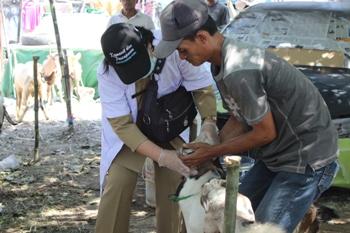 Penjual Kurban Disarankan Ambil dari Jatim