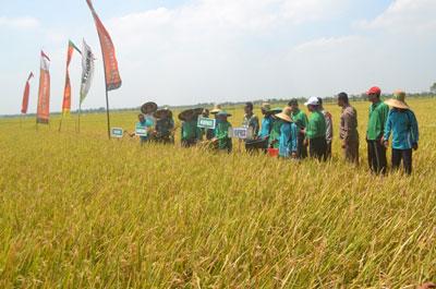 Manfaatkan Air Bawah Tanah dan Pertahankan Pola Tanam