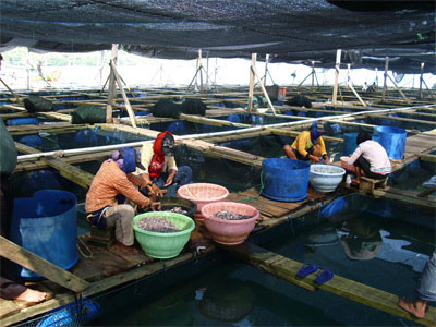 Lewat Program Mina Tani, Area Budi Daya Ikan di Malang Diperluas