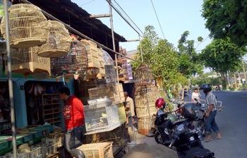 Pedagang Nekad Jual Burung di Pasar Agung