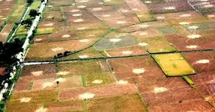 Lumajang Perlu Perda Lahan Pertanian Lanjutan