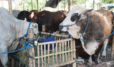 Dongkrak Produksi, Usulkan Bantuan Kandang Ternak