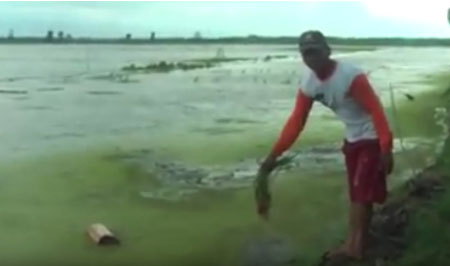Banjir, 800 Hektare Padi Gagal Panen