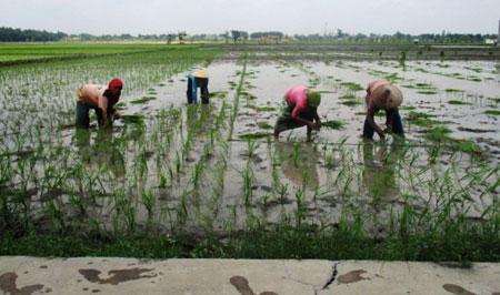 Optimalkan 300 Ribu Hektar Lahan Potensial di Madura
