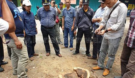 Belasan Sonokeling Hilang, Kadishut Jatim Sebut Ada Maling
