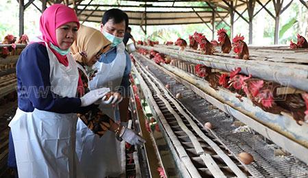 Jangan Cemas Konsumsi Telur Asal Jatim
