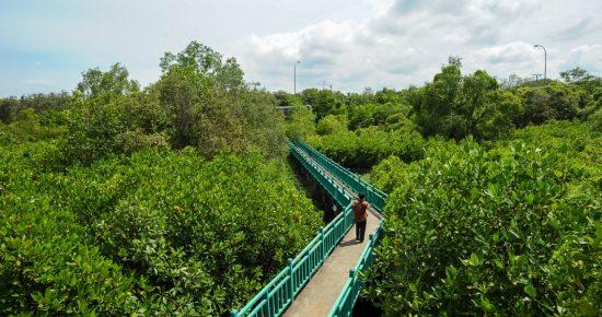 Lestarikan Hutan Kota