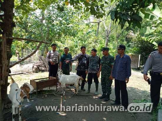 Babinsa 0814/09 Kudu Sosialisasikan Produktifitas Ternak Kambing