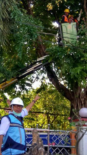 PLN Pamekasan Rabas-rabas Pohon Antisipasi Padam Listrik
