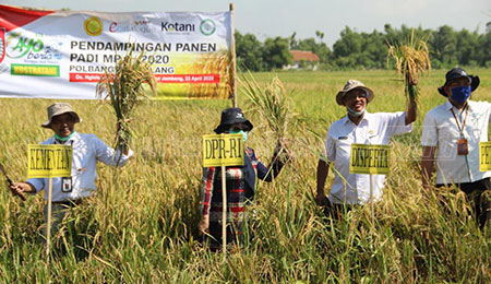 Pandemi Covid-19, Produksi Beras di Jombang Surplus