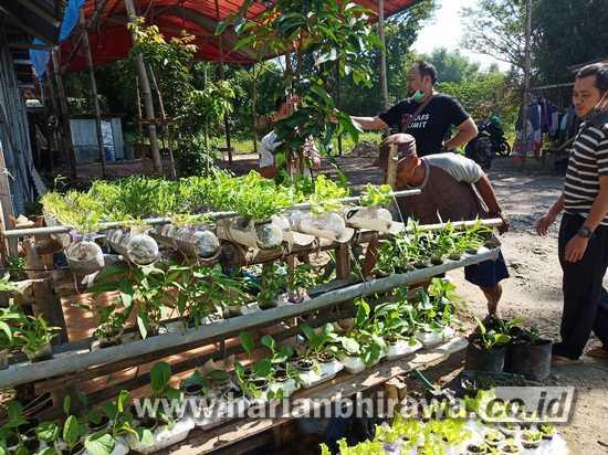 Warga Desa Beruh Sampang Budidaya Sayur di Tengah Pandemi Covid-19