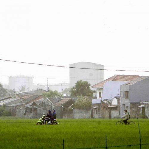 Miris, Lahan Pertanian di Jawa Timur Terus Menyusut