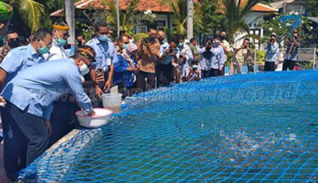 Tabur Benih Ikan, Menteri KKP Kunjungi BPBAP Situbondo