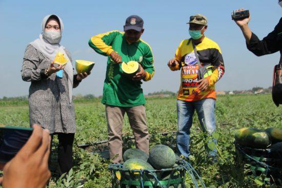 Anggota DPR-RI Ning Ema Sambangi Petani Semangka di Kesamben Jombang