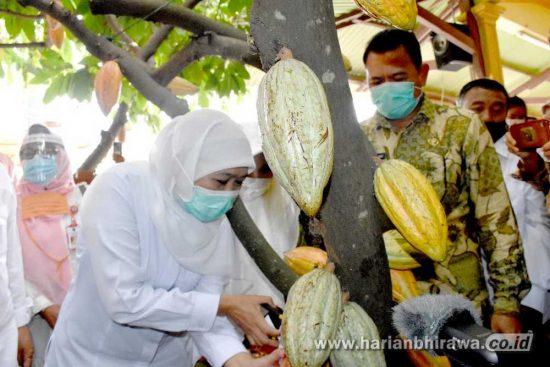 Khofifah Tilik Industri Olahan Mamin dan Poktan Kakao di Kabupaten Mojokerto