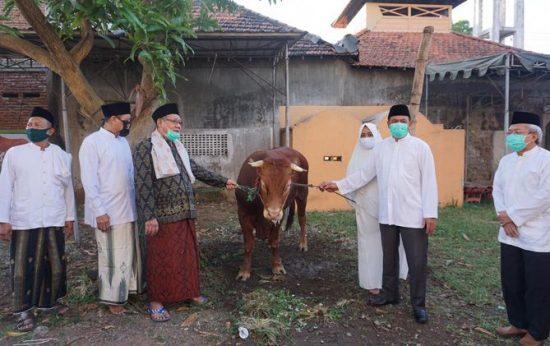Pemerintah Kabupaten Mojokerto Kurban Tiga Sapi dan 20 Kambing