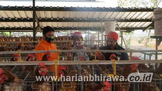 SIG Pabrik Tuban Sinergikan Cluster Unggas Binaan