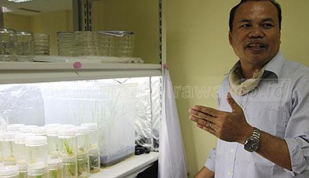 Guru Besar Faperta Unej, Kembangkan Melinjo sebagai Suplemen Super
