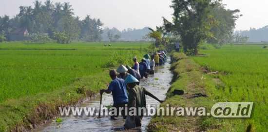 Pengerukan di Saluran Irigasi, Kurangi Luapan Air Hujan ke Sawah
