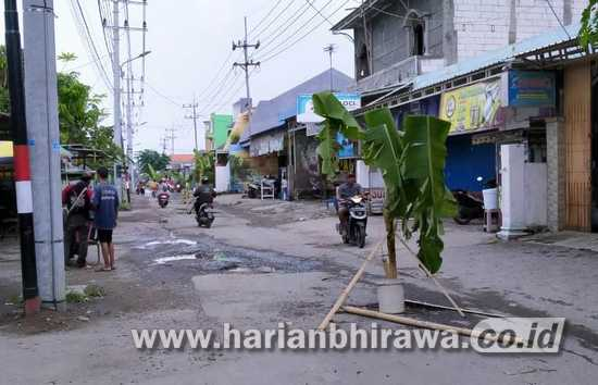 Kecewa Jalan Rusak, Warga Dusun Bantengan Sidoarjo Tanam Pohon Pisang di Jalan