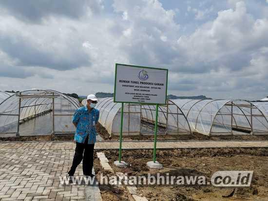 Musim Pengujan, Petani Garam dan Diskannak Tuban Mampu Produksi Garam