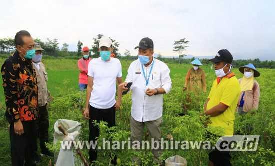 Kementan Kembangkan Bawang Putih di Kabupaten Probolinggo
