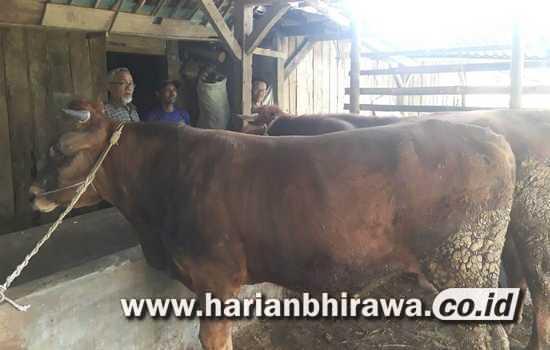 Pandemi Covid-19, Menurunkan Permintaan Daging Sapi di Kabupaten Malang