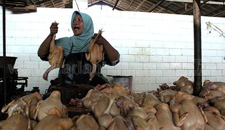 Awal Ramadan, Harga Daging Ayam Broiler Naik