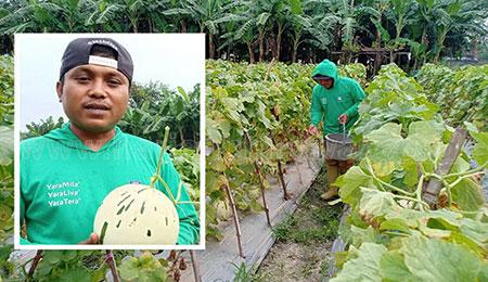Hasan Prasojo, Belajar Bertani Melon Secara Otodidak