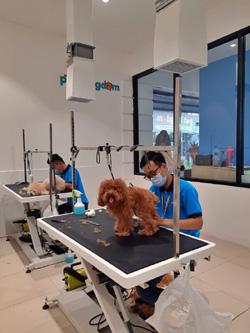 Pet Kingdom Hadir Pertama di Surabaya Manjakan Pet Lover dengan Pet Facillity Terluas