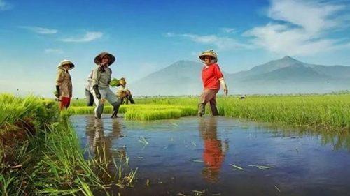 Percantik Daya Tarik Sektor Pertanian