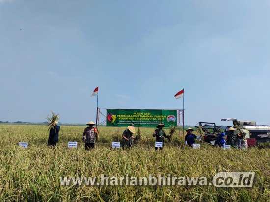 Dandim 0816 Sidoarjo Pimpin Panen padi di Desa Rejeni Krembung