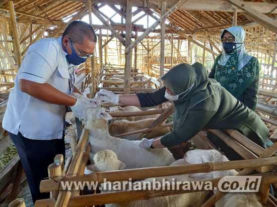 Jelang Iduladha, Petugas DPKH Kabupaten Situbondo Periksa Hewan Kurban