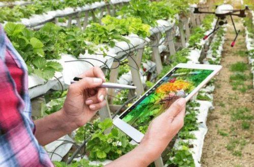 Peningkatan dan Pengkualitasan SDM Pertanian
