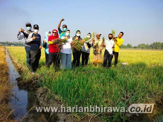 Petani Bawang Merah Desa Cemeng Bakalan Sidoarjo Optimis Walau Beresiko