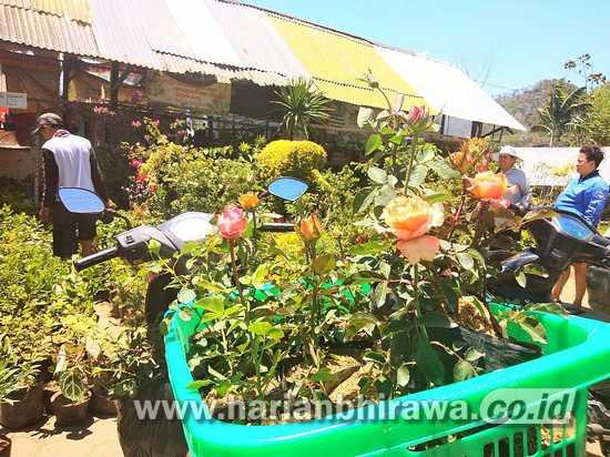 PPKM Level 4 Belum Berakhir, Petani Bunga Menjerit