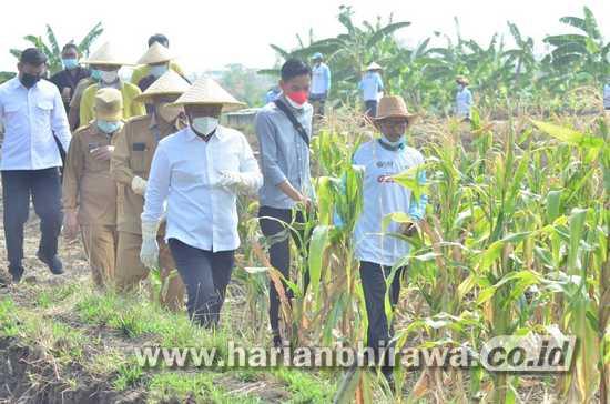 Desa Setro Gresik Jadi Pilot Project Ekosistem Pertanian