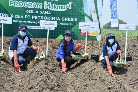 Program Makmur, Wujud Dukungan Petrokimia dan PTPN X Tingkatkan  Produktivitas Tanaman Tebu