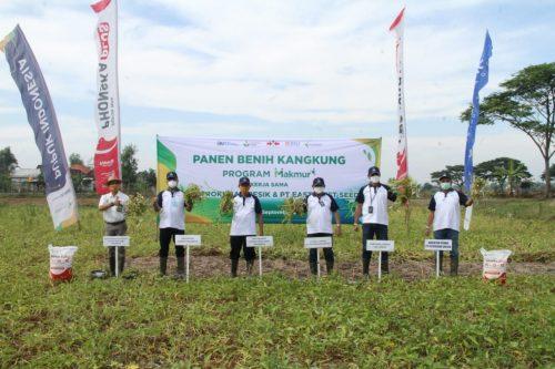 Program Makmur Petrokimia Gresik, Tingkatkan Panen Benih Kangkung  12 Persen