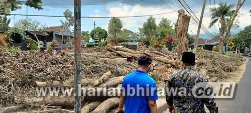 Wakil Bupati Bondowoso Ingatkan Tak Ada Lagi Penebangan Pohon