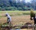 Terdampak Pandemi Covid-19,  Sektor Pertanian di Provinsi Jawa Timur Turun