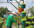 Geliat Urban Farming di Kota Berjuluk Paris Van East Java