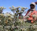 Balita dan Manula Dilarang Kunjungi Bromo